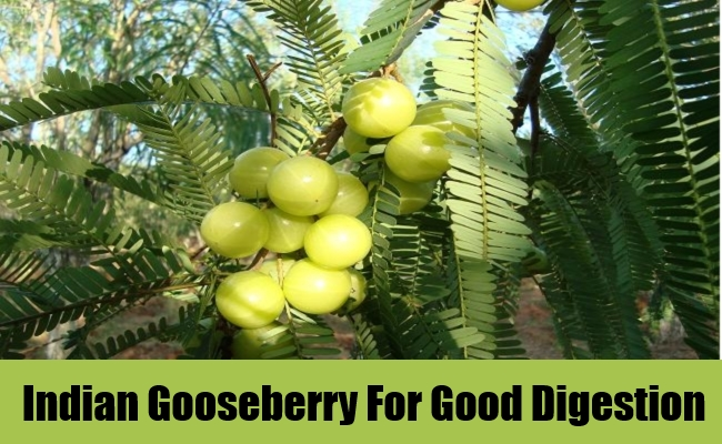 Indian Gooseberry For Good Digestion