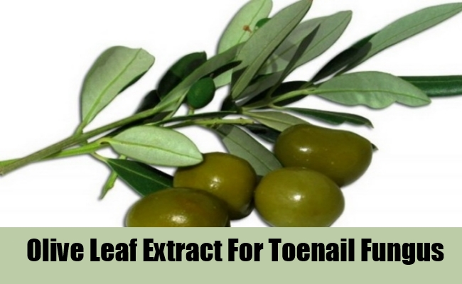 Olive Leaf Extract For Toenail Fungus