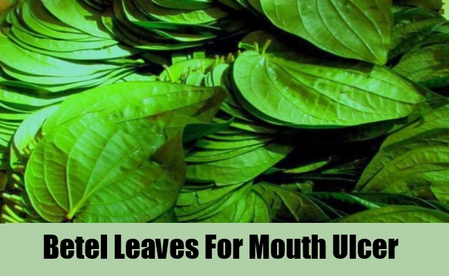 Betel Leaf For Mouth Ulcers