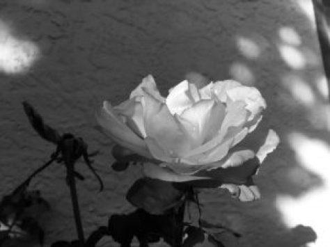 Black and White Blog Photo Challenge