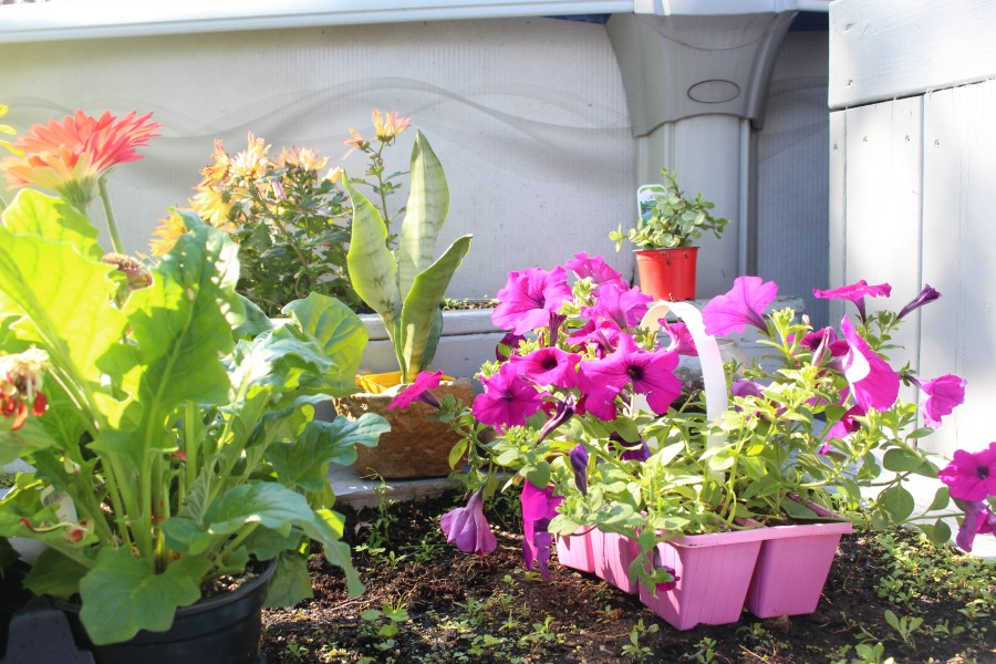Planting Vegetables & Flowers In Our Garden