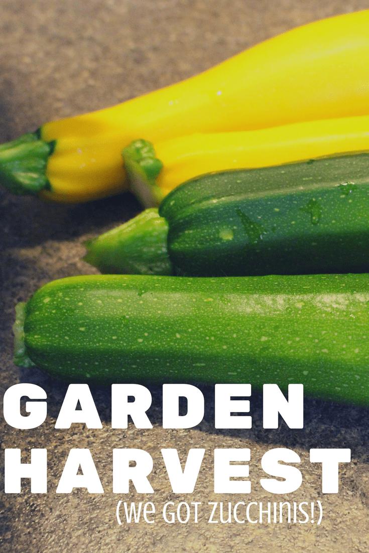 Garden Harvest - We Got Zucchinis!