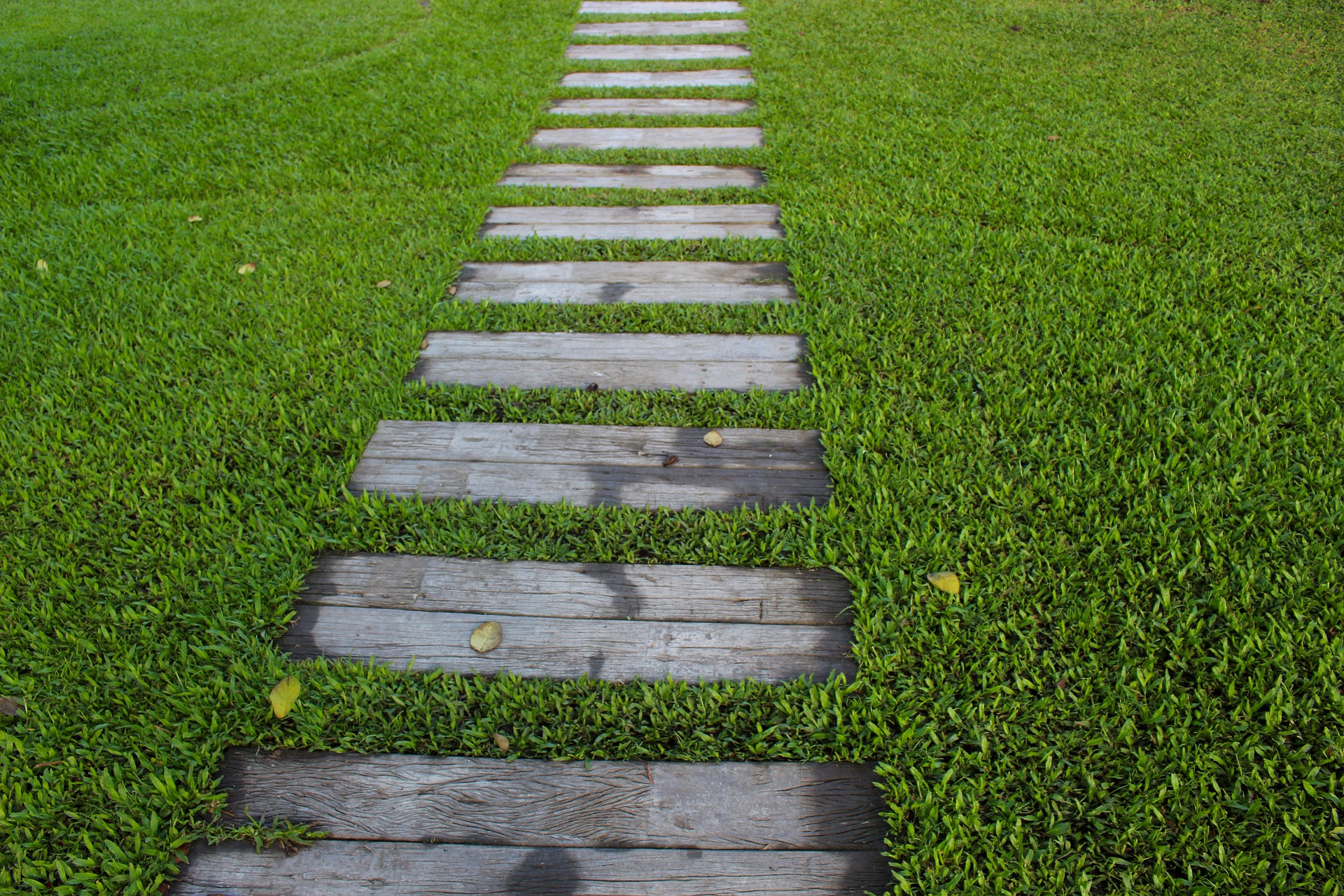 Splendid Paths: Design Ideas for Home Gardeners