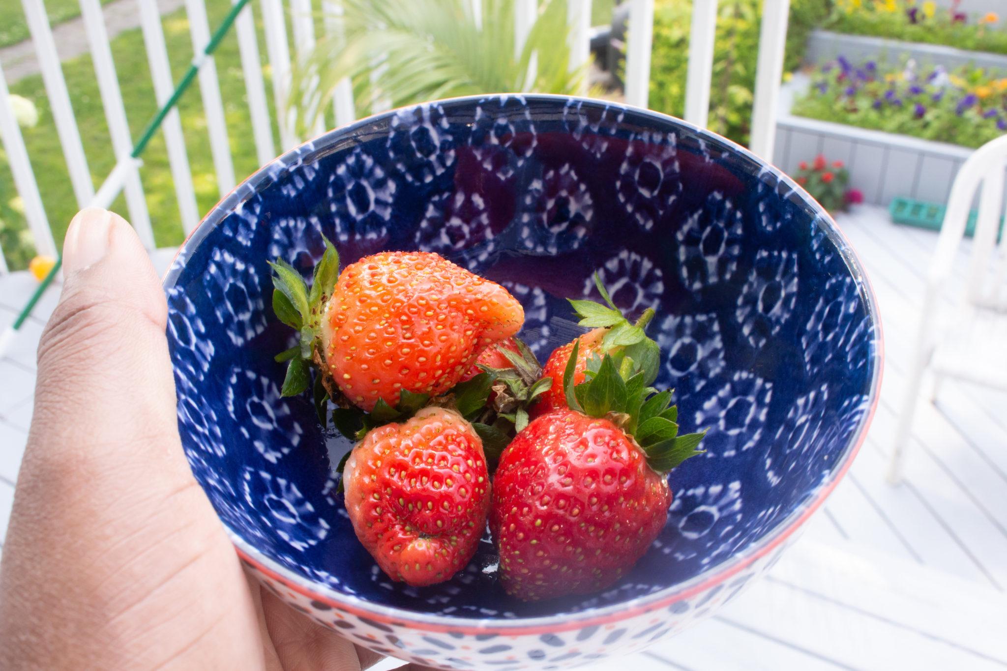 Garden Update: Strawberry picking in our own yard!