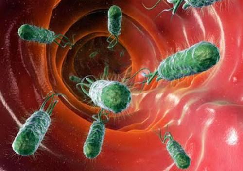 Gasolina con bacteria del intestino