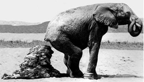 Fabrica biogás con excrementos de elefante