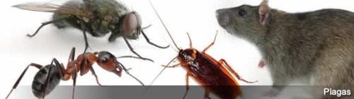 lucha con las plagas con productos verdes
