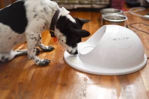 Clever Pet - Smart Feeder