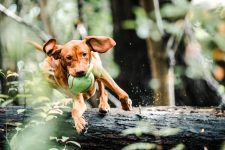 5 High Tech Pet Gadgets To Pass Time During The Pandemic