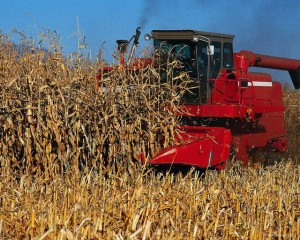 https://i1.wp.com/www.lafayette-online.com/wp-content/uploads/2009/09/00006_corn_harvest2-300x240.jpg