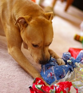 Veterinarian Offers Top 10 Christmas Gifts For Pets