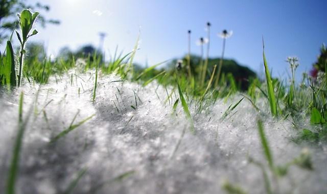 allergie au polen