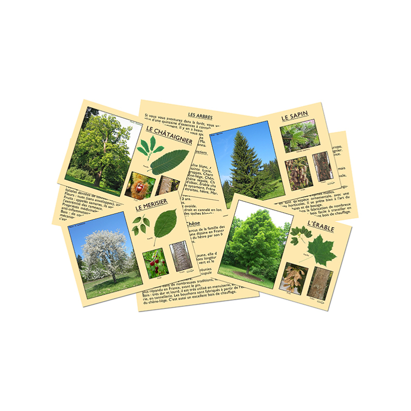 J'apprends à reconnaitre les arbres
