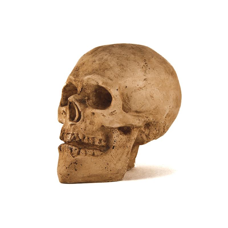 Crâne en plâtre pour halloween