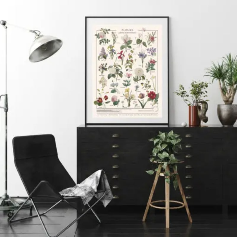 affiche botanique fleurs