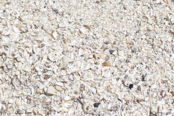 Shells at Cana Island