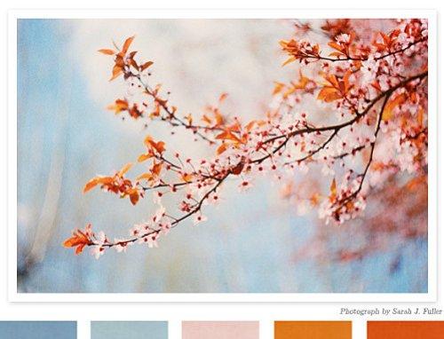 Fiancee-du-Panda-Si-j-etais-une-palette-de-couleur.jpg