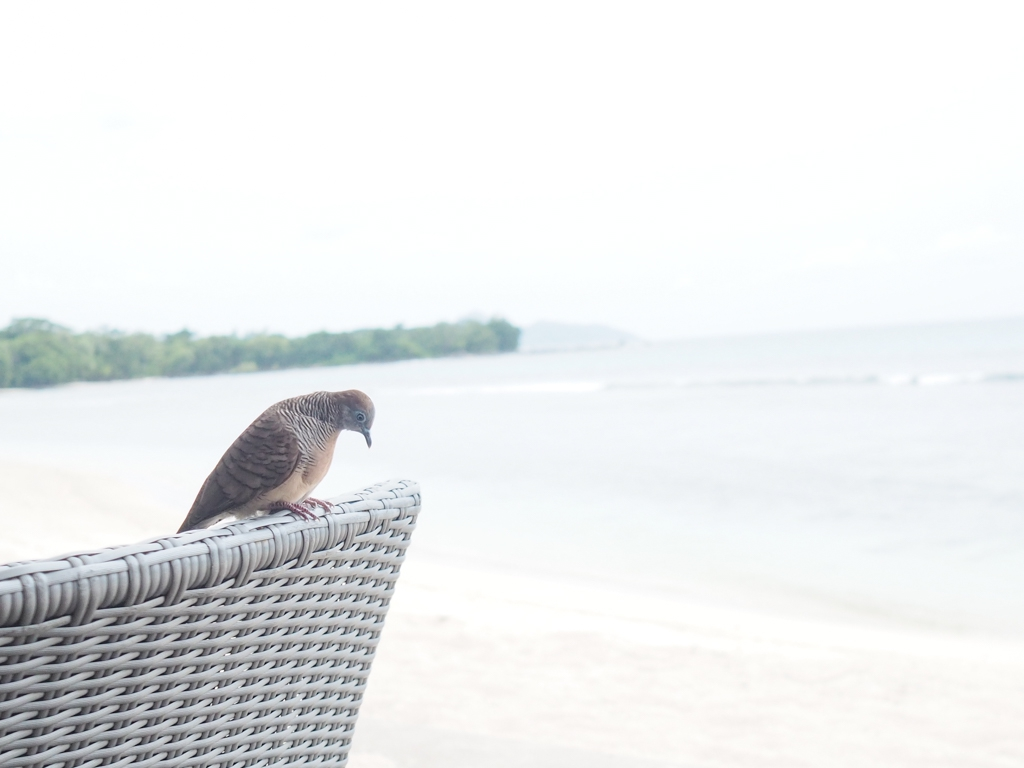 Voyage de noces Seychelles bonnes adresses hotel Avani Mahe avis l La Fiancee du Panda blog mariage-2214158