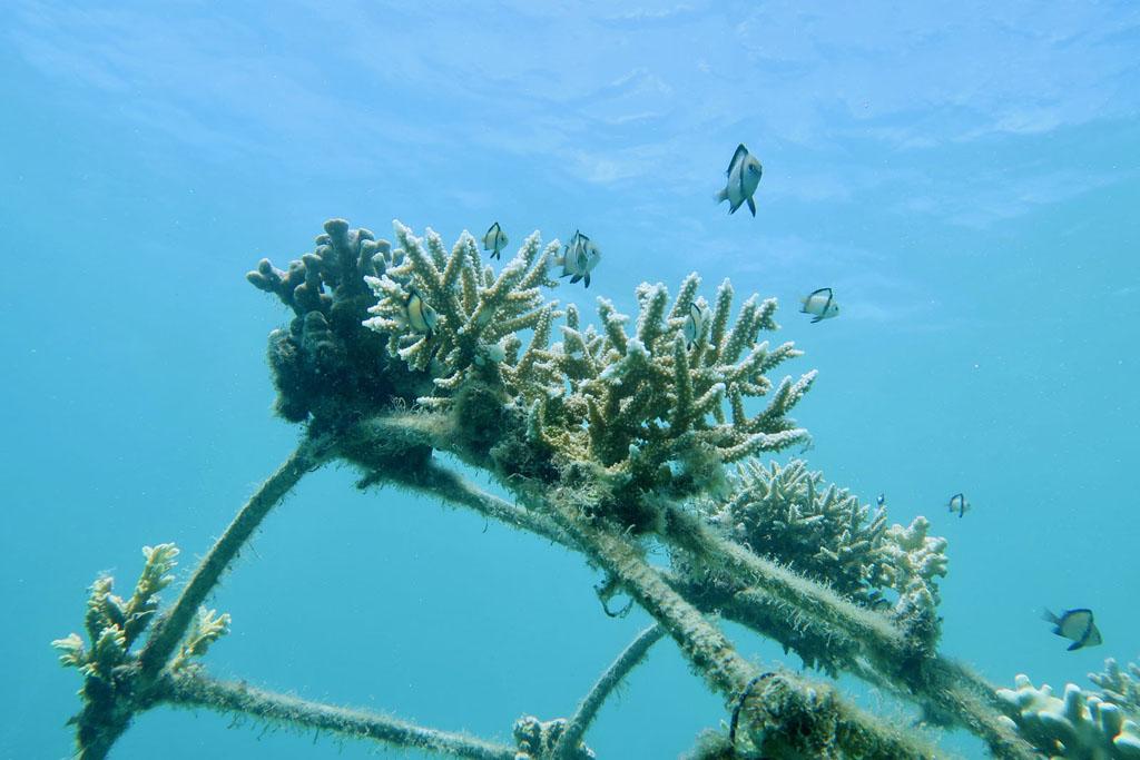 Reforestation de corail a Bali projet Pokmasta avec Avene l La Fiancee du Panda blog famille et lifestyle