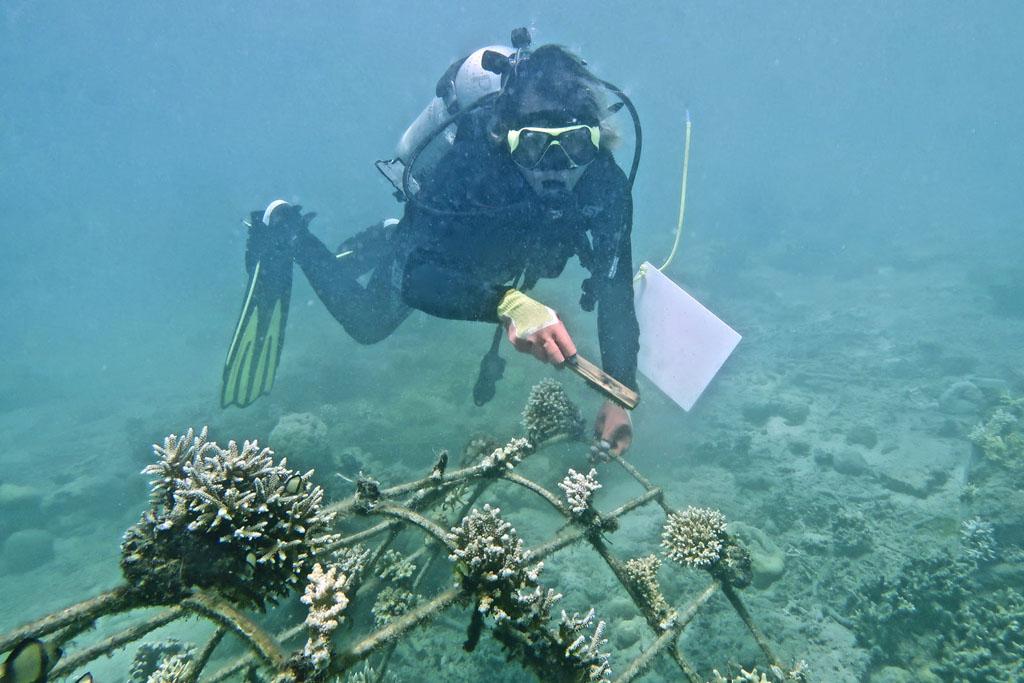 Sauver le corail a Bali Pemuratan avec Avene et Pur projet l La Fiancee du Panda blog famille et lifestyle