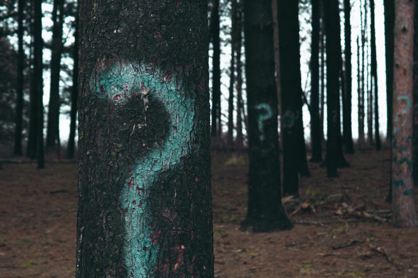 la question de l'avenir de la Finance dans l'entreprise écrite sur un arbre
