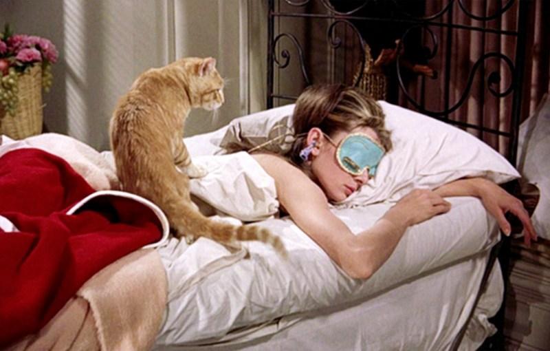 donna sola gatti