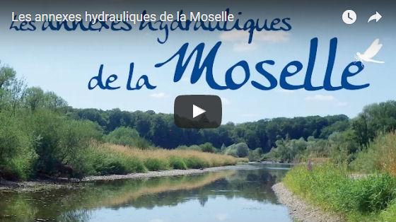 Sortie du film sur les annexes hydrauliques de la Moselle