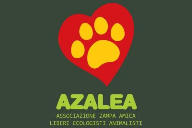 L'Oasi Azalea