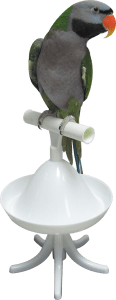 A Derbyan Parakeet on the Percher® Bird Perch.