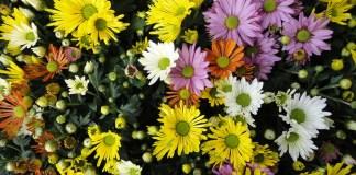 Floristik & Garten - Lagerhaus Mieming für das Mieminger Plateau