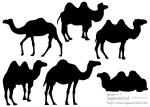 ラクダのシルエット素材