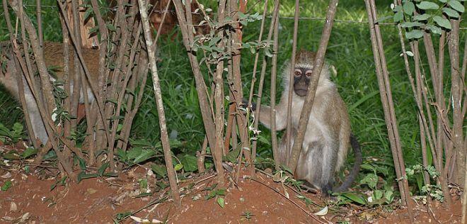 Image result for nairobi arboretum