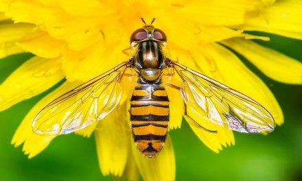 Un ecosysteme d'insectes s'effondre catastrophiquement à cause de nous