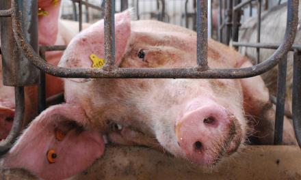 Adieu – et bon débarras – à l'élevage des animaux
