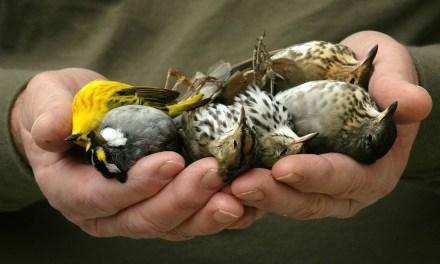 Les oiseaux disparaissent des campagnes françaises à une « vitesse vertigineuse »