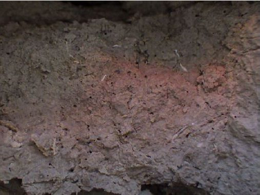 Les traces de vers dans la boue extractée