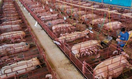 Une réduction énorme de la consommation de viande est «essentielle» pour éviter la dégradation du climat
