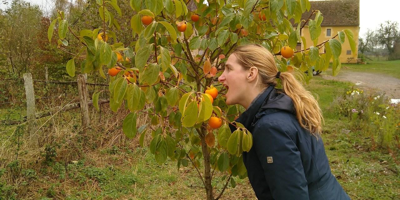 La plantation de nos premiers arbres fruitiers et l'arrivée des chatons