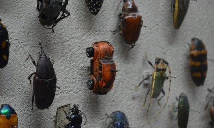 L'apocalypse des insectes est ici. Qu'est-ce que cela signifie pour le reste de la vie sur Terre ?