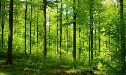 """Des recherches montrent qu'un billion d'arbres pourraient être plantés pour capter d'énormes quantités de <span class=""""caps"""">CO2</span>"""