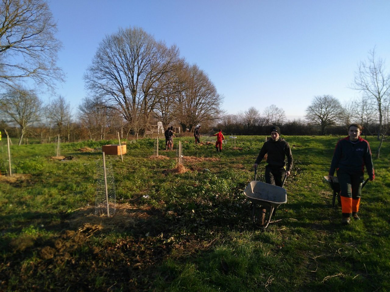 Planting trees with the local forestry college