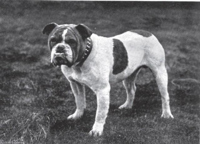 perros cien años