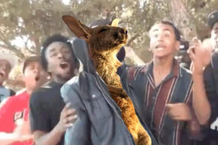 tdfw canguro