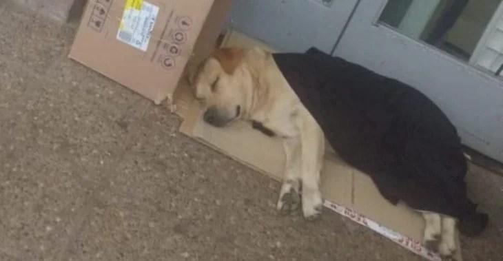 Toto, perro que sigue esperando a su dueño
