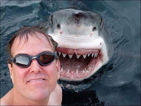 mejores-selfies-tiburon