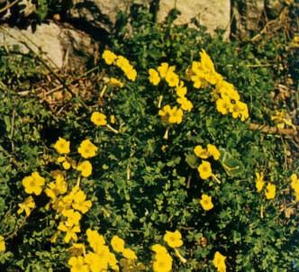 Fotografía de la planta Agrios