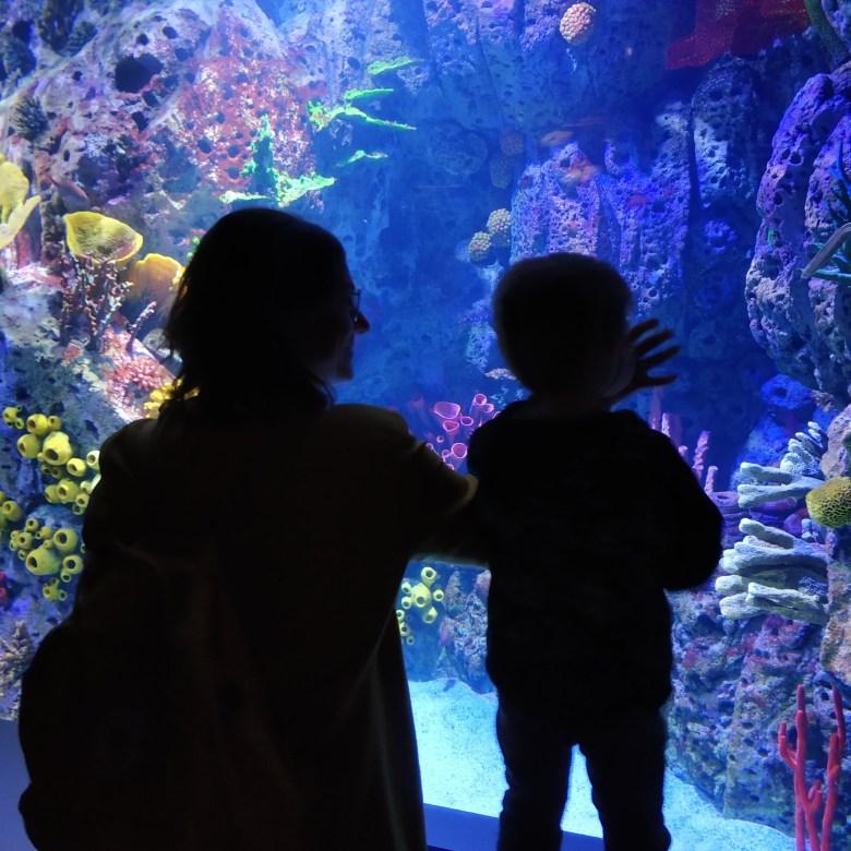Atlantis aquarium LGDL (10)