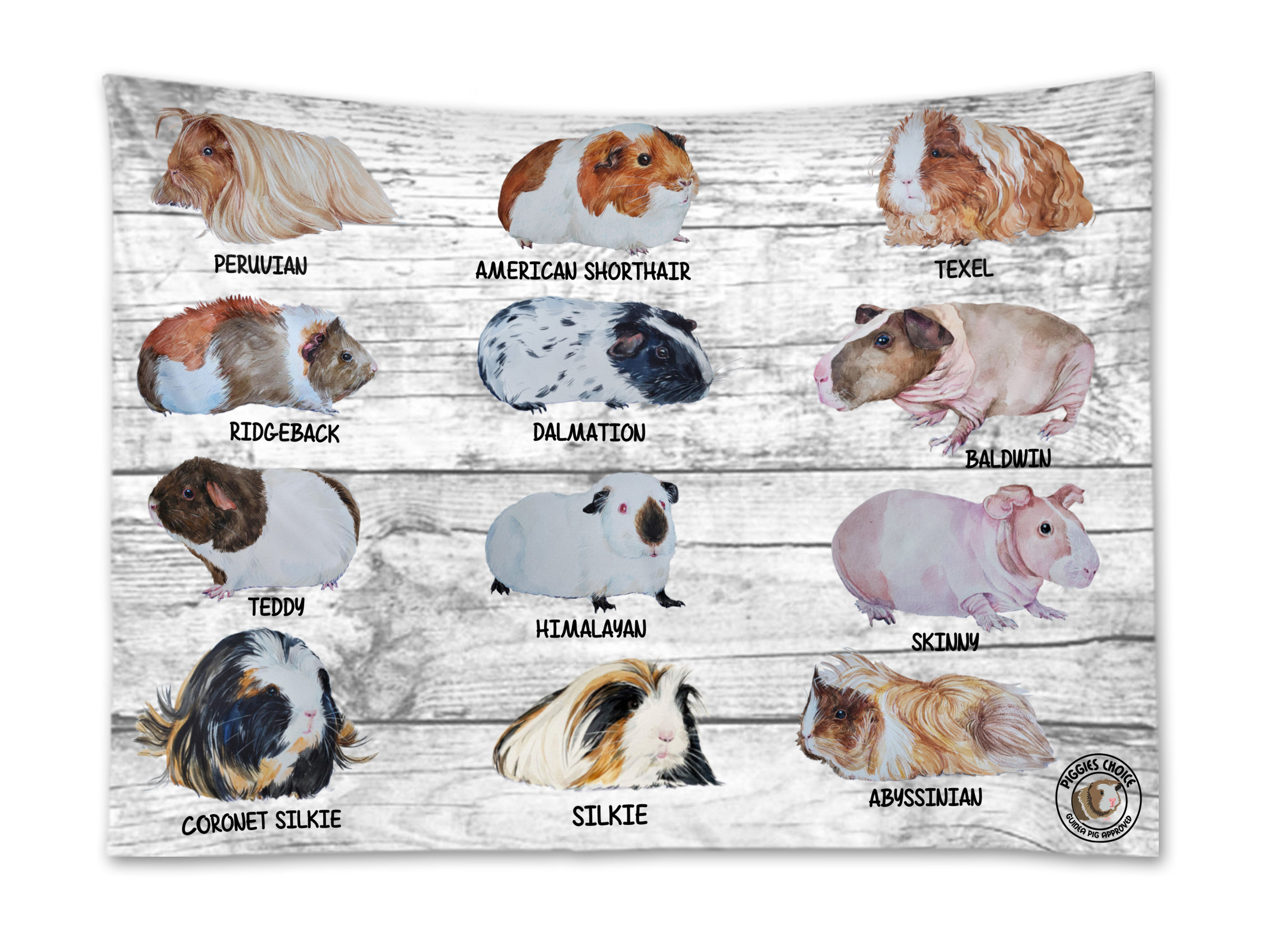 piggies choice guinea pig breed wall hanging tapestry depicting all breeds