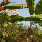 BananaGrove