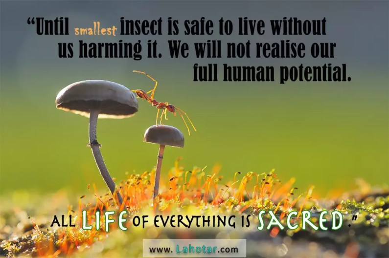 Until smallest insect is safe…